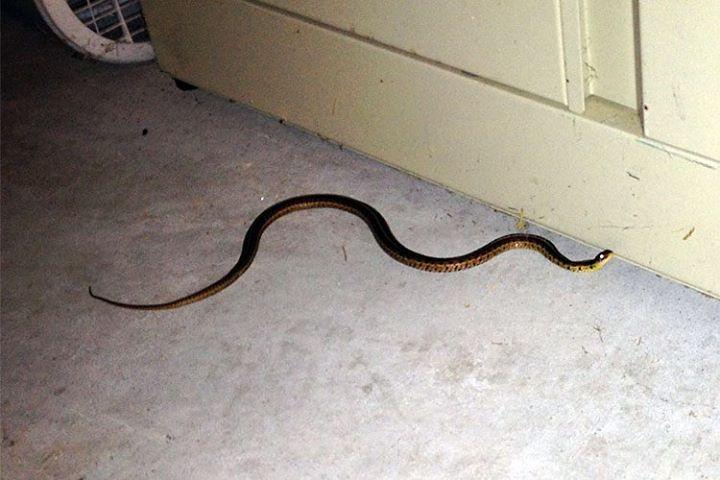 Garage Snake.