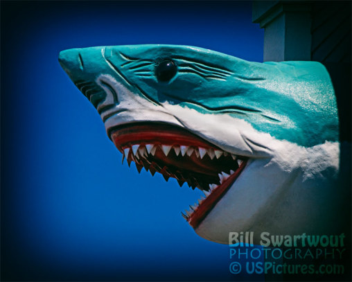 Ocean City Shark Attack